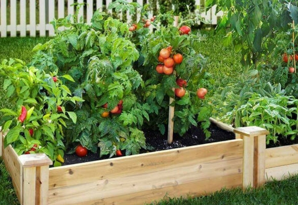 How To Design Your Backyard Vegetable Patch Modularwalls