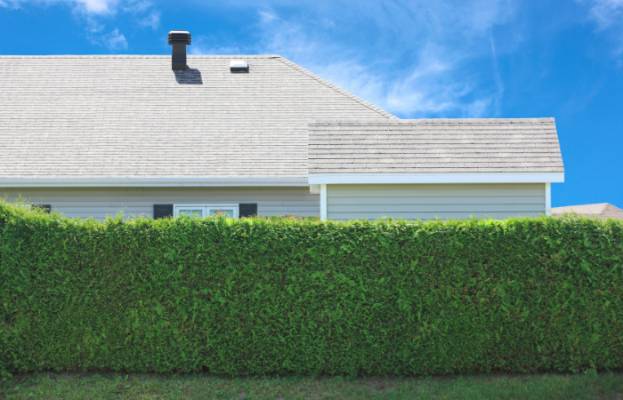How to reduce noise in your backyard - Hedge