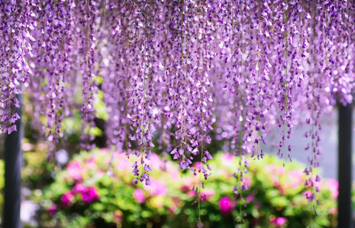 Wisteria garden wall - Front Wall types