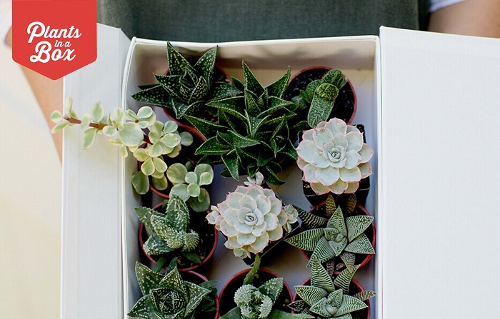 Plants in a Box Voucher - Prizes | ModularWalls