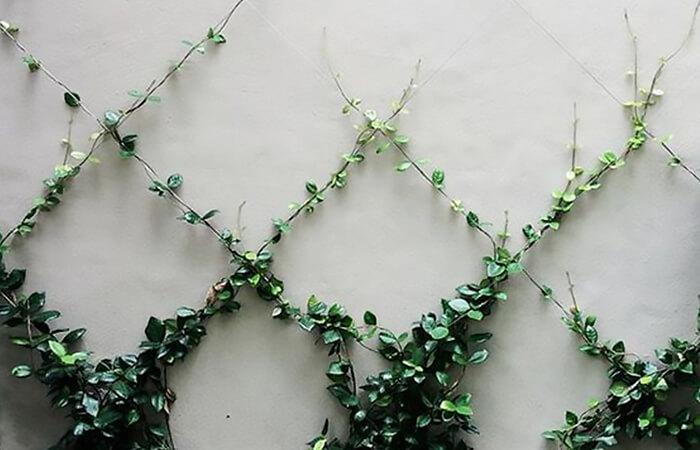 Design Trend of the Month - Climbing Plants | ModularWalls