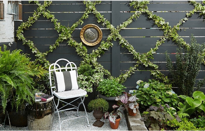 Climbing Plants & Trellis Wire Designs - Design Trend of the Month | ModularWalls