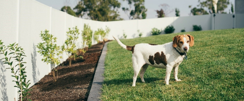 Turn Your Backyard into a Pet Paradise | ModularWalls