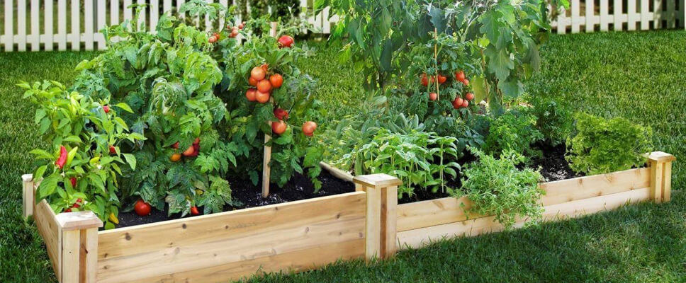 Backyard Vegetable Garden Design Modular Walls