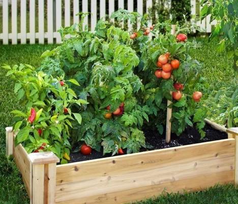 vegetable_garden_veggie_patch_small
